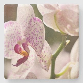 Porta-copo De Pedra Orquídeas por Shirley Taylor