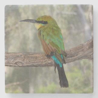 Porta-copo De Pedra Pássaro do abelha-comedor do arco-íris, Austrália