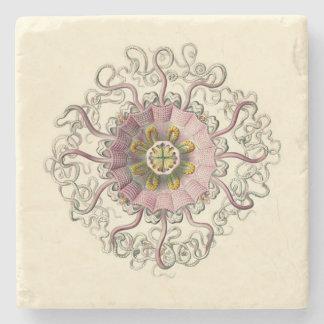 Porta-copo De Pedra Porta copos de Haeckel Peromedusa
