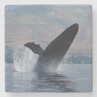 Porta-copo De Pedra rompimento da baleia de humpback