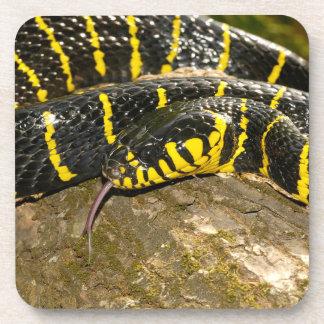 Porta-copo Dendrophila de Boiga ou cobra dos manguezais