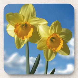 Porta-copo Dois Daffodils amarelos 2,2