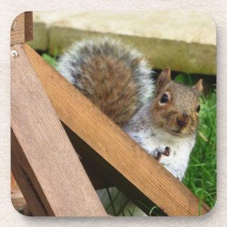 Porta-copo Esquilo cinzento selvagem bonito
