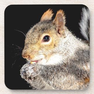 Porta-copo Esquilo que come uma porca