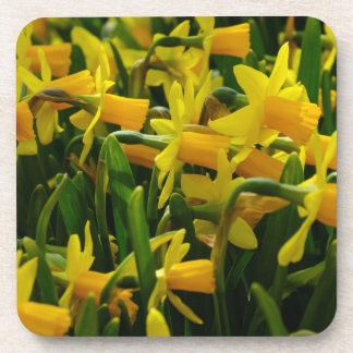 Porta-copo Família do Daffodil