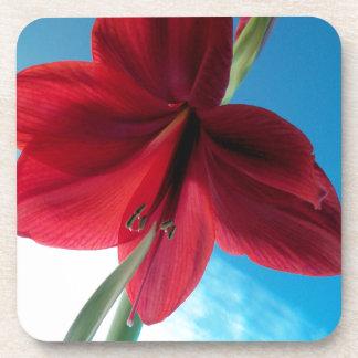 Porta-copo flor vermelha vívida do Amaryllis 108a