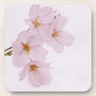 Porta-copo Flores de cerejeira bonitas do primavera em Tokyo