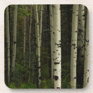 Porta-copo Floresta branca