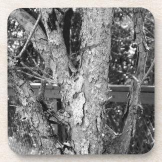 Porta-copo Foto preto e branco da natureza da árvore