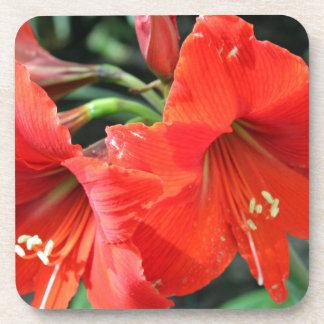 Porta-copo Fotografia vermelha bonita da flor