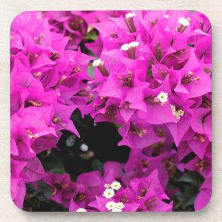 Porta-copo Fundo fúcsia roxo do Bougainvillea
