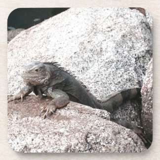 Porta-copo Iguana selvagem