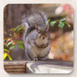 Porta-copo Implorando o esquilo