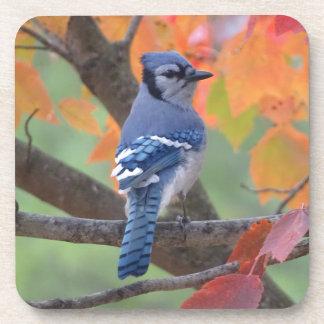 Porta-copo Jay azul