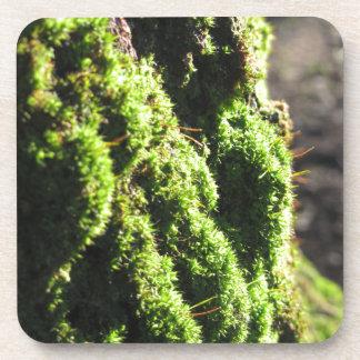 Porta-copo O musgo verde no detalhe da natureza de musgo