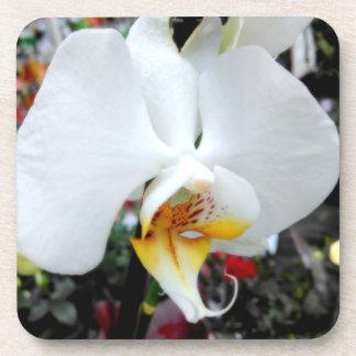 Porta-copo Orquídea branca bonita do Phalaenopsis