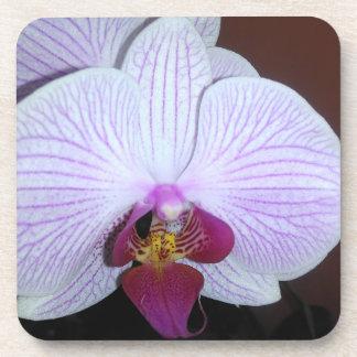 Porta-copo Orquídea branca do Dendrobium com veias roxas