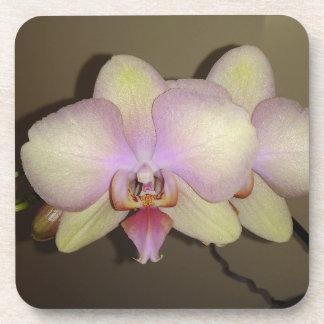 Porta-copo Orquídea cor-de-rosa amarela do Dendrobium do