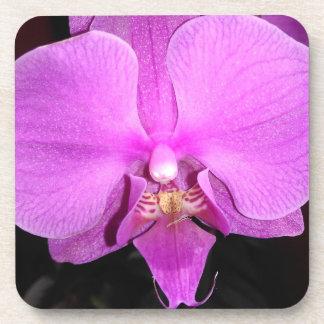 Porta-copo Orquídea cor-de-rosa do Dendrobium