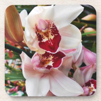 Porta-copo Orquídeas cor-de-rosa do Dendrobium