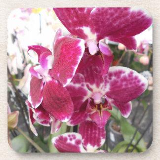 Porta-copo Orquídeas Splotched roxas do Phalaenopsis