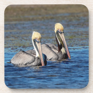 Porta-copo Pares de pelicanos