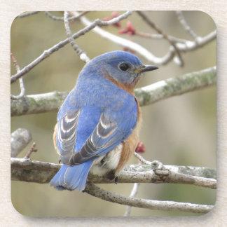 Porta-copo Parte traseira do Bluebird