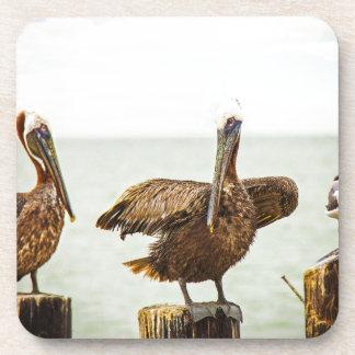 Porta-copo Pelicanos empoleirados em cargos