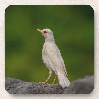 Porta-copo Pisco de peito vermelho do albino no ponto da