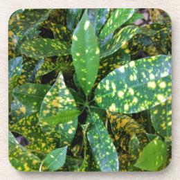 Porta-copo Planta do Croton