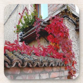 Porta-copo Planta Running vermelha e a janela