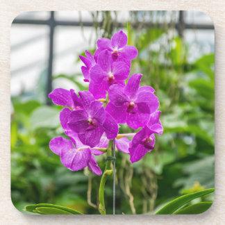 Porta-copo Portas copos plásticas duras das orquídeas