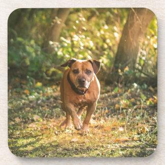 Porta-copo Staffordshire bull terrier