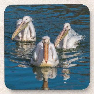 Porta-copo Três portas copos plásticas duras dos pelicanos