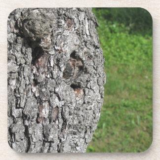 Porta-copo Tronco de árvore da pera contra o fundo verde