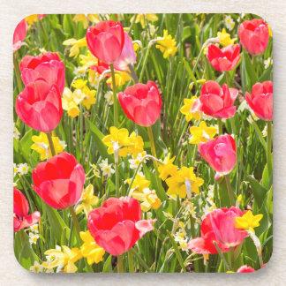 Porta-copo Tulipas e Daffodils