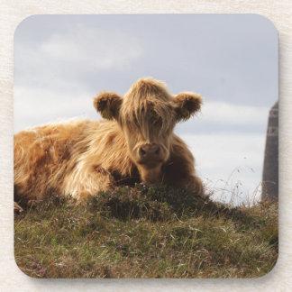 Porta-copo Vaca de Luing na ilha de Islay, Scotland