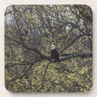 Porta-copo Vigia de Eagle Painterly