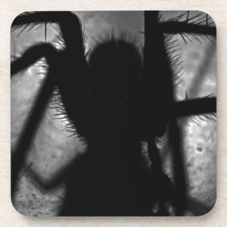 Porta-copos Arachnophobia…