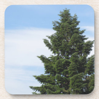 Porta Copos Árvore de abeto verde contra um céu claro