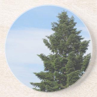 Porta-copos Árvore de abeto verde contra um céu claro