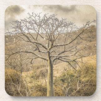 Porta Copos Árvore de Ceiba na floresta Guayas Equador