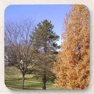Porta Copos Árvores da queda
