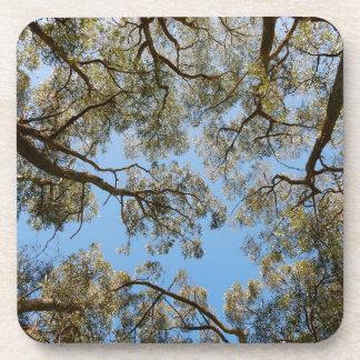 Porta Copos Árvores de goma contra um céu azul