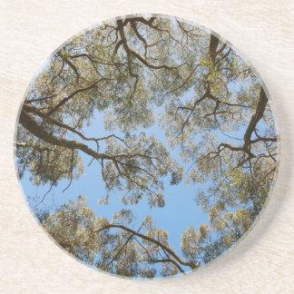 Porta-copos Árvores de goma contra um céu azul