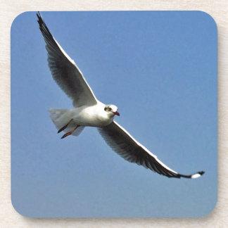 Porta Copos As gaivotas são pássaros bonitos
