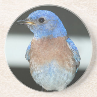 Porta-copos Bluebird ocidental