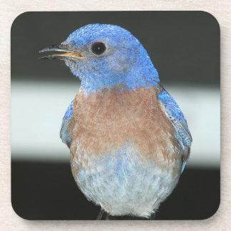 Porta Copos Bluebird ocidental