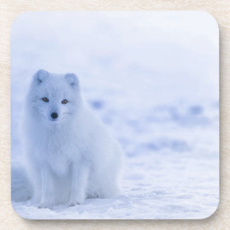 Porta-copos branco do poder dos animais de Islândia