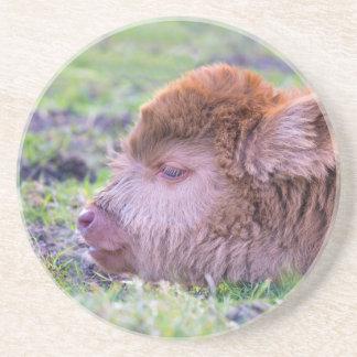Porta-copos Cabeça da vitela escocesa recém-nascida marrom do